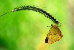ButterflyY0nGhdr-NRTopDetEdgShrp-copy.jpg